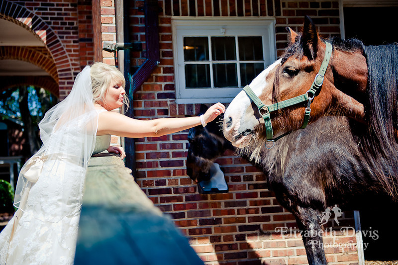 Tallahassee photography bride with horse